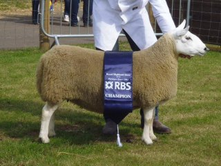 Highland Show Champion 2014